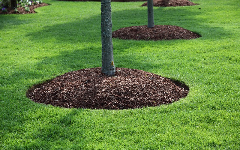 Fertilization around trees with beautiful lawn care
