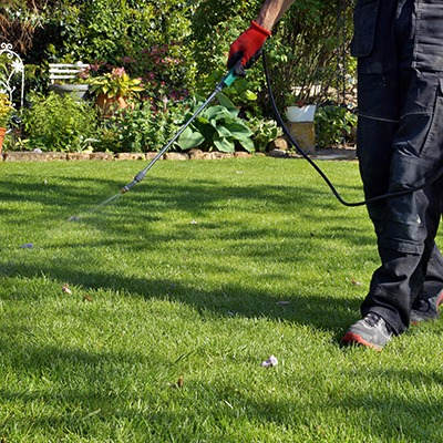 spraying pesticide with portable sprayer to eradicate garden weeds in the lawn. weedicide spray on the weeds in the garden. Pesticide use is hazardous to health.